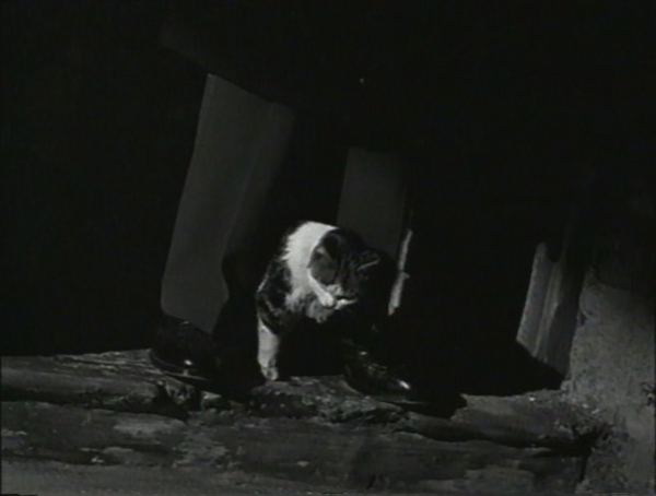 8.gatoPies